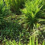 palm-grove10