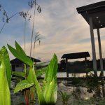palm-grove4